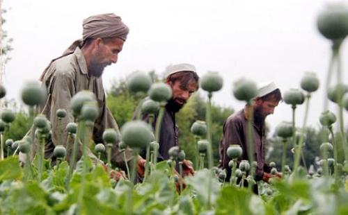 2010-01-19-afghan-opium.jpg