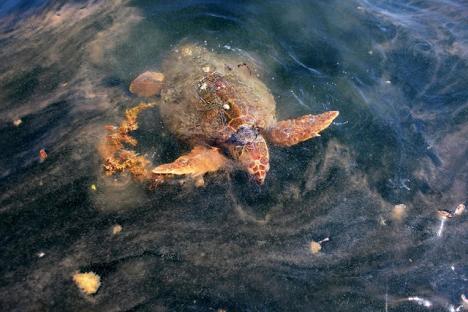2010-06-14-oil-spill-03.jpg