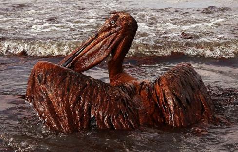 2010-06-14-oil-spill-07.jpg