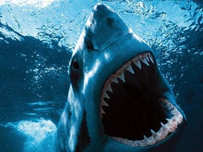 2012-02-26-shark.jpg