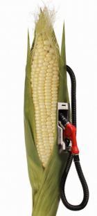 2008-08-31-biocarburant.jpg