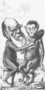 2009-04-15-darwin-monkey.jpg