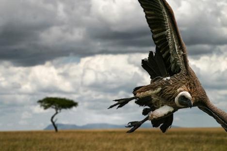 2010-05-13-vulture.jpg