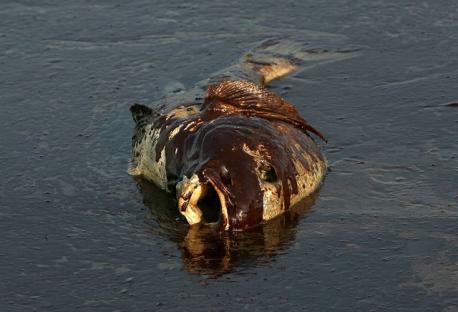 2010-06-14-oil-spill-09.jpg