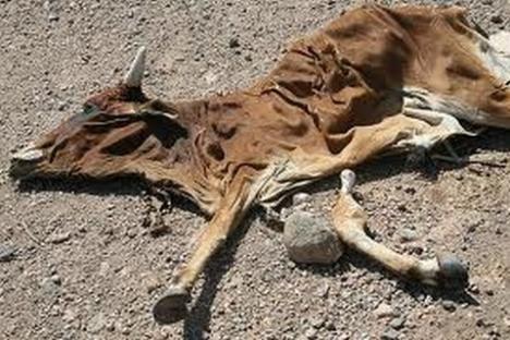 2011-07-24-famine-africa.jpg
